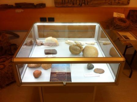 Mushroom Display Case at Birdsville Visitor Centre