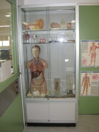 School Display Cabinets by Showfront - Anatomy Lab